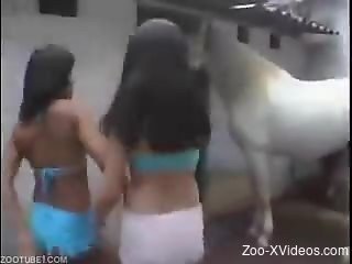 Dirty sluts in animal porn scenes on cam