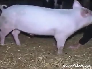 Pink pig with big cock drills a sexy farm girl