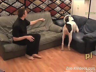 Nice zoophile sucks and licks his doggy's dick on the bed