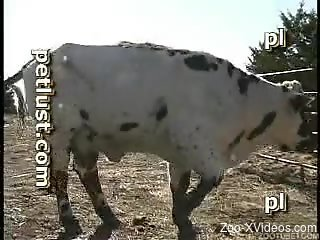 Adorable cow gets hardly fucked at the farm by nasty cowboy