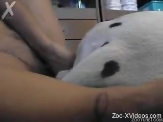 Busty amateur filmed while spinning dog cock in her wet fanny