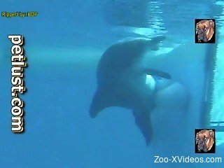 Underwater zoophilia fetish with diver filming the dolphin vagina